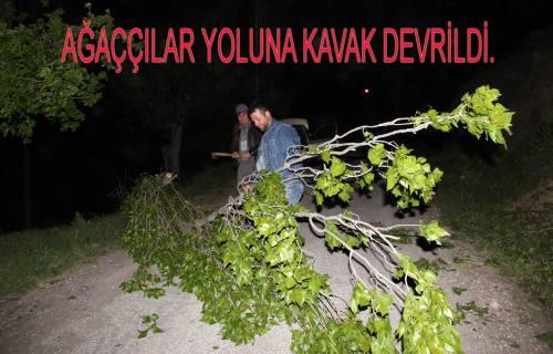 Fırtına ağaç devirdi.