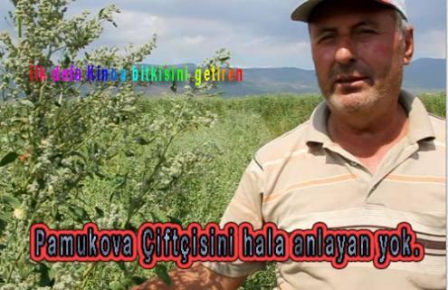 Pamukova çiftçisi Kinoa yetiştirmeye başladı.