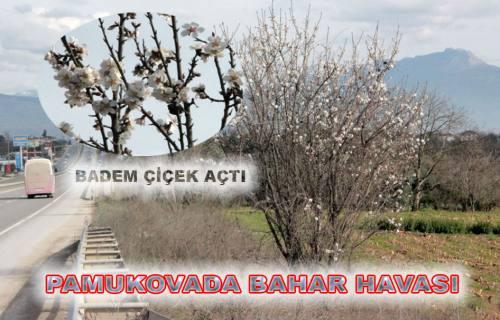 Pamukova da Badem Çiçek Açtı