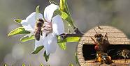 Arılar Çalışmaya başladı.