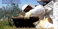 Pamukova Arı Yetiştirici Kursiyerleri...