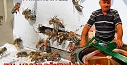 Pamukova da arı üreticileri bal sağımlarına...