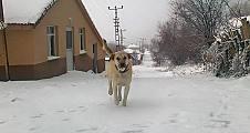 Kış Kapıya Dayandı