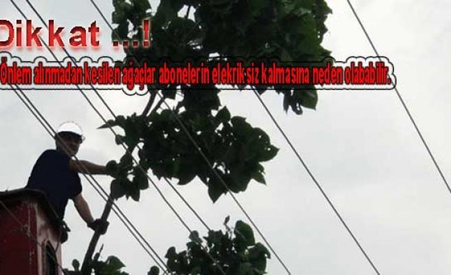 SEDAŞ tan uyarı! 'Enerj hatlarına yakın, izinsiz ağaç kesmeyin'