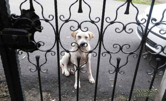 O köpek geri döndü