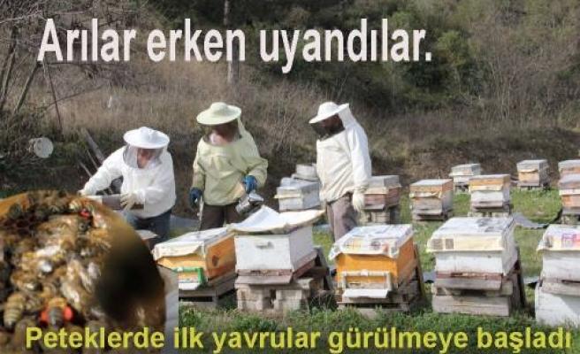 Arılar Erken uyandı.