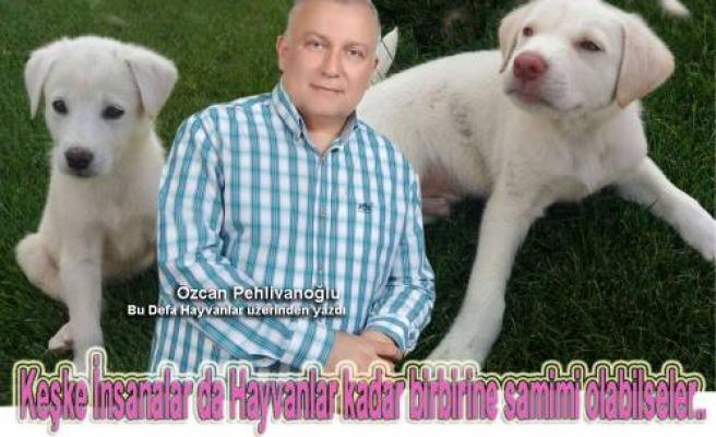 Özcan Pehlivanoğlu bu defa Sultan ve Reis adındaki köpekleri üzerinden yazdı.