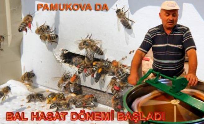 Pamukova da arı üreticileri bal sağımlarına başladılar.