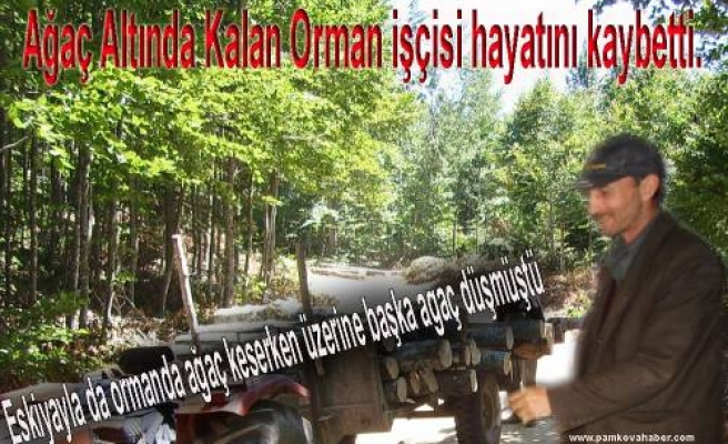 Üzerine ağaç devrilen Orman İşçisi bugün hayatını kaybetti.