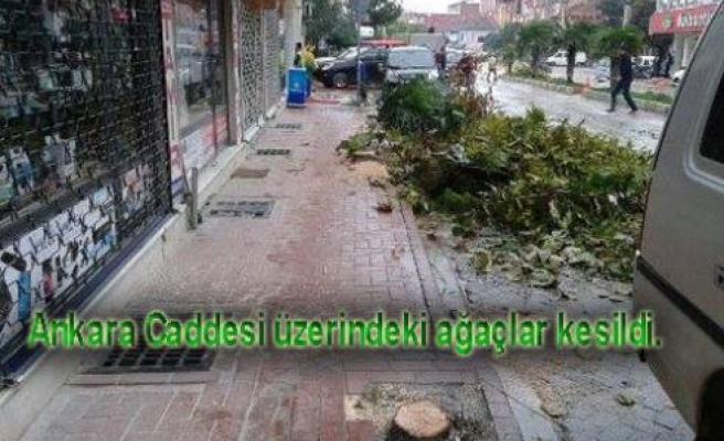 Yine Ağaçlar Kesildi.