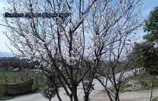 Pamukova'da kış ve bahar bir ada yaşanıyor.